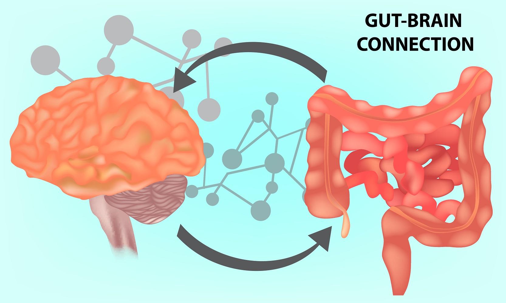 腸内環境で性格まで変わる!? 健康管理に役立つ「脳腸相関」の考え方